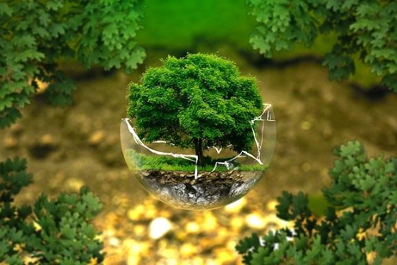 """Ranking """"Best Global Green Brands"""", czyli jakie marki są ekologiczne"""
